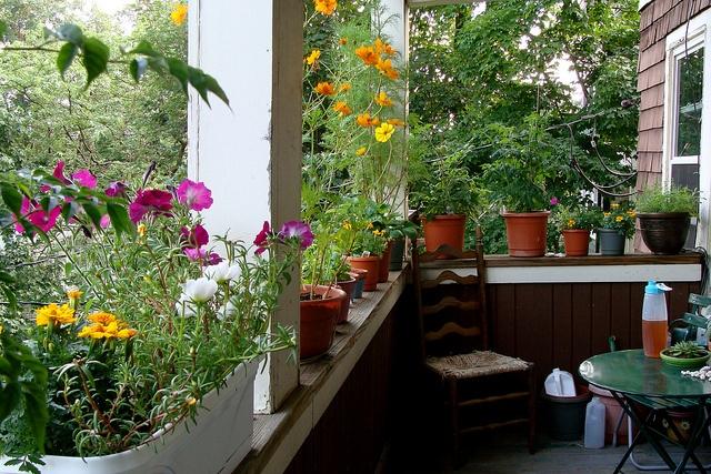 Plants on ledge