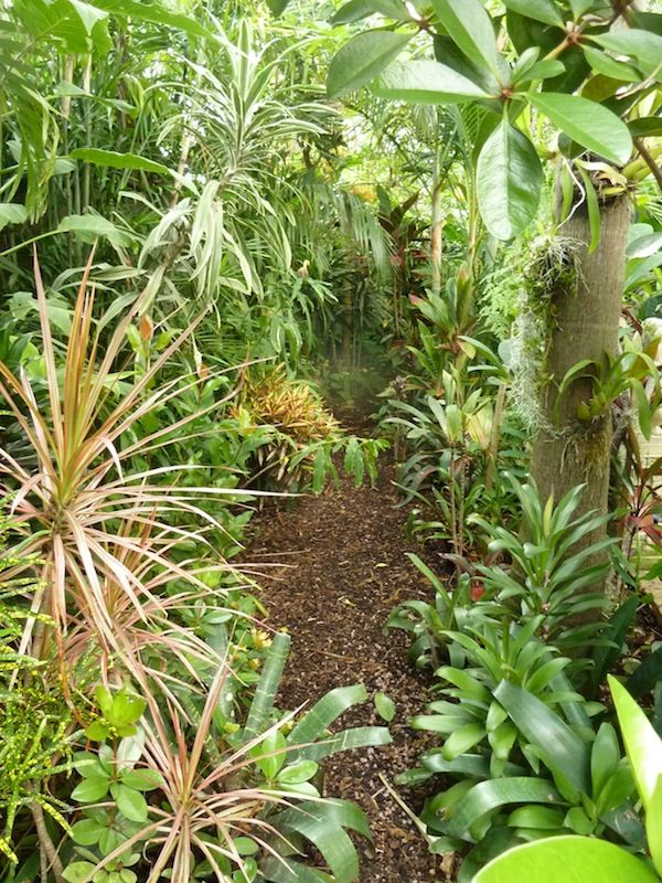 365 best Tropical images on Pinterest Landscaping Tropical