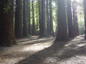 The Redwood Forest - Havelock North