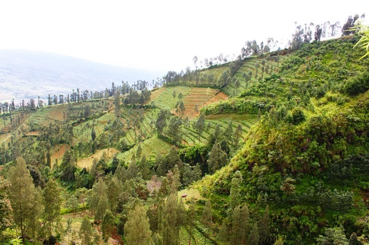 Mt. Sumbing, Temanggung, Central Java, Indonesia.