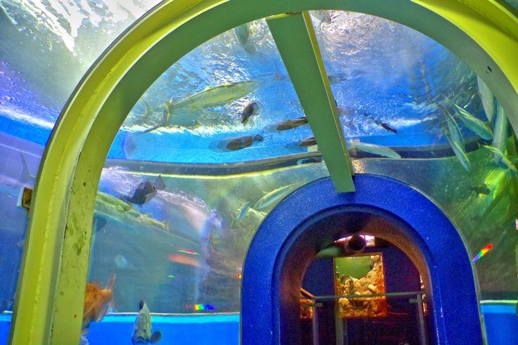 寒ブリ水槽(魚津水族館)