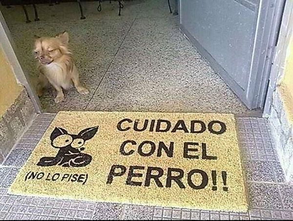 Cuidado con el perro (no lo pise) Watch out for the dog (don't step on it)