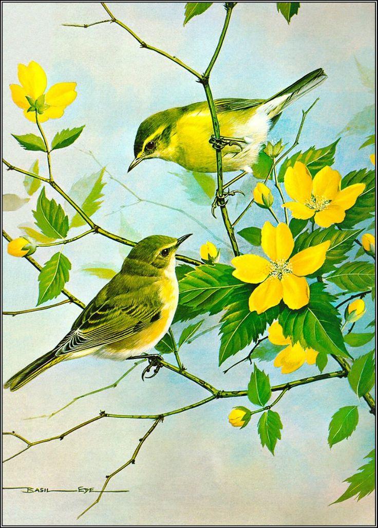 Çizilmiş kuşlar, Sulu Boya Kuş Resimleri, Ressamların Kuş Çizimleri, Sanatsal Resimler, Karakalem Sulu Boya Çizim Kuşlar, Art Pictures, Güzel Kuş Çizimleri