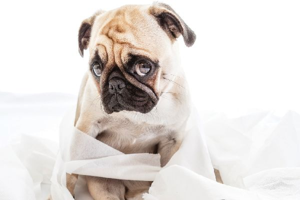 Dog Diarrhea Yuck We Ve All Dealt With It Unfortunately Diarrhea Is A Common Affliction In Our Canine Friends Wond Dog Diarrhea Remedy Dogs Dog Health Care