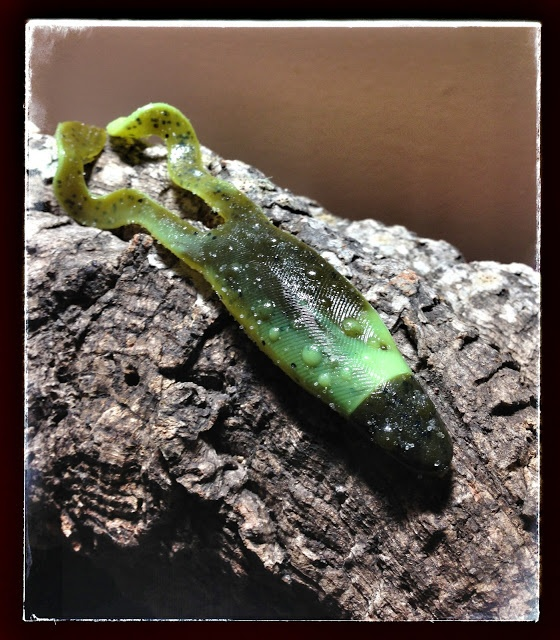 13 best images about fishing products reviews on pinterest for Frogs for fishing