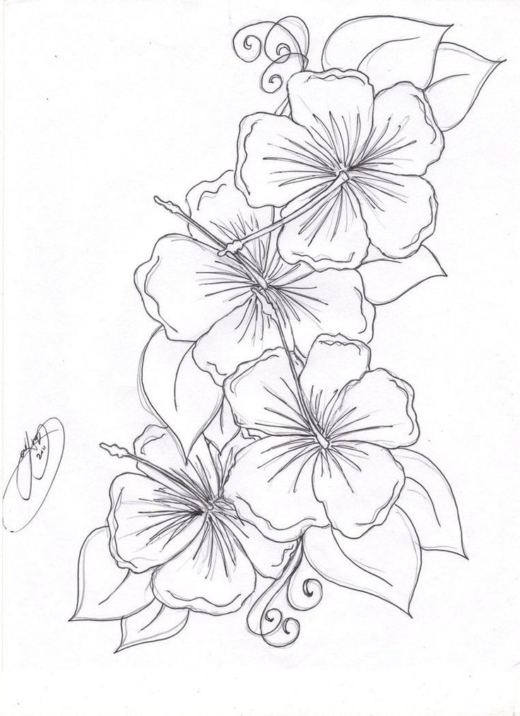 Coloring Pages Of Hibiscus Flowers : Beautiful flower coloring pages free hibiscus