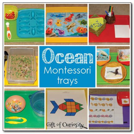 Ocean Montessori trays - Gift of Curiosity -- such a neat variety of hands-on learning