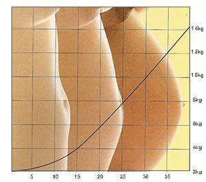 Distribución del peso en el embarazo