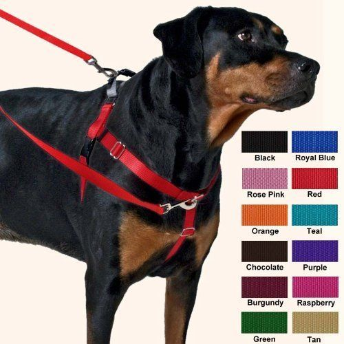 Wiggles Wags and Whiskers Freedom No-Pull Harness Training Package ** Click on the image for additional details.