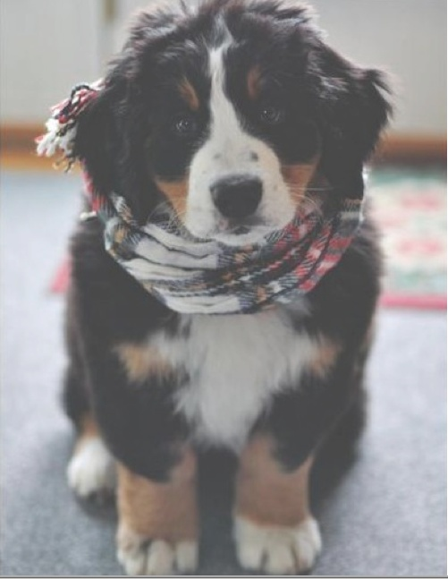 I want this dog in my life.