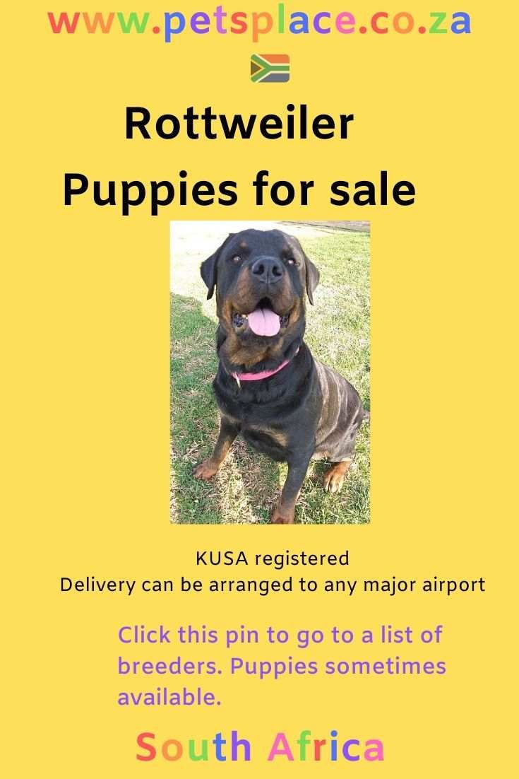 There Are Several Rottweiler Breeders In South Africa Who Have