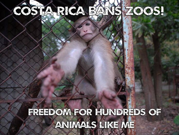 VICTORY! Costa Rica will CLOSE ALL ZOOS & release hundreds of animals from captivity & those unsuited for release will live out their days in wildlife sanctuaries ♥