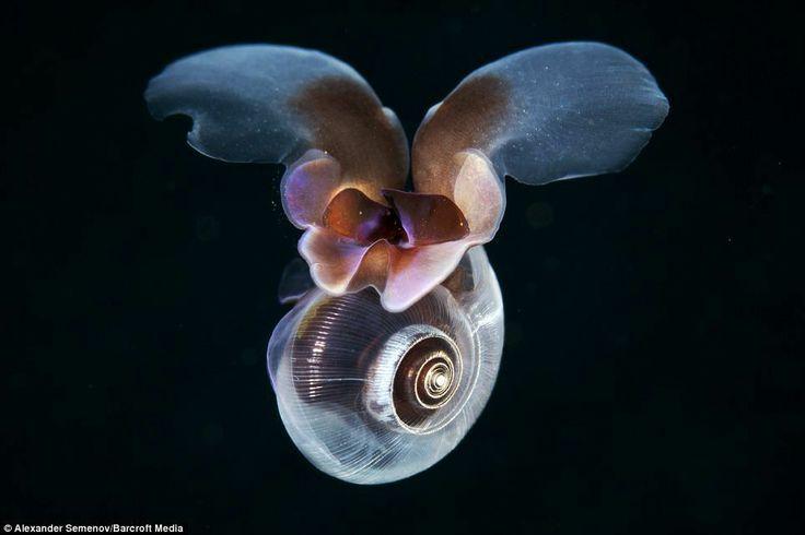 Mariposa de mar