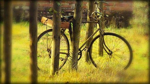 Bicicleta Rene