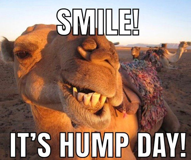 Happy Hump Day It S All Downhill From Here Hump Day Quotes Funny Funny Hump Day Memes Funny Good Morning Memes