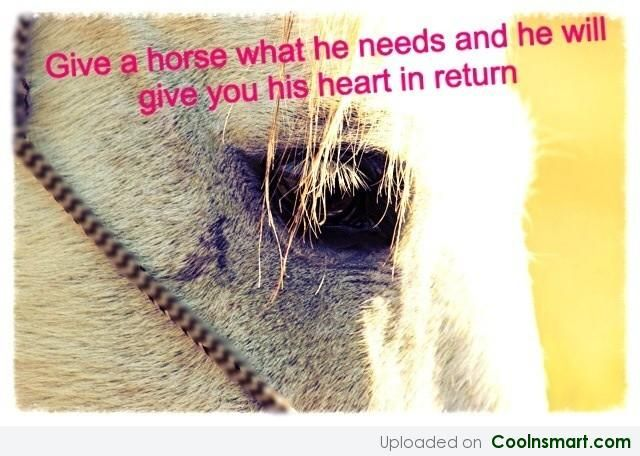 Cute Horse Quotes: 27 Best Horse Quotes Images On Pinterest