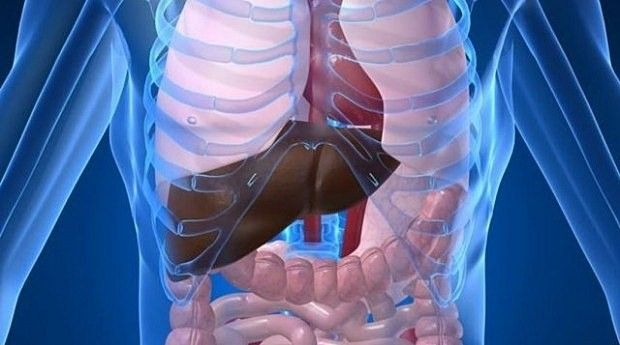 I am 60 years old and this plant has restored my vision, remove fat from the liver and and completely cleans my colon