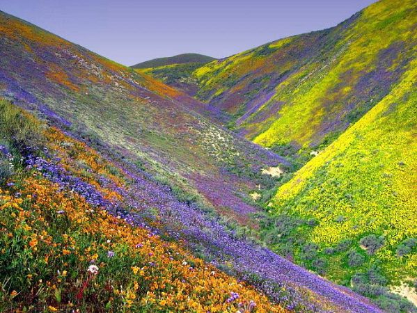 valley covered with multicolored flowers in wild bloom