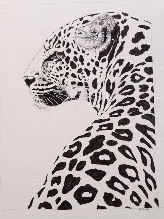 Leopard ink drawing, beautiful and majestic animal print