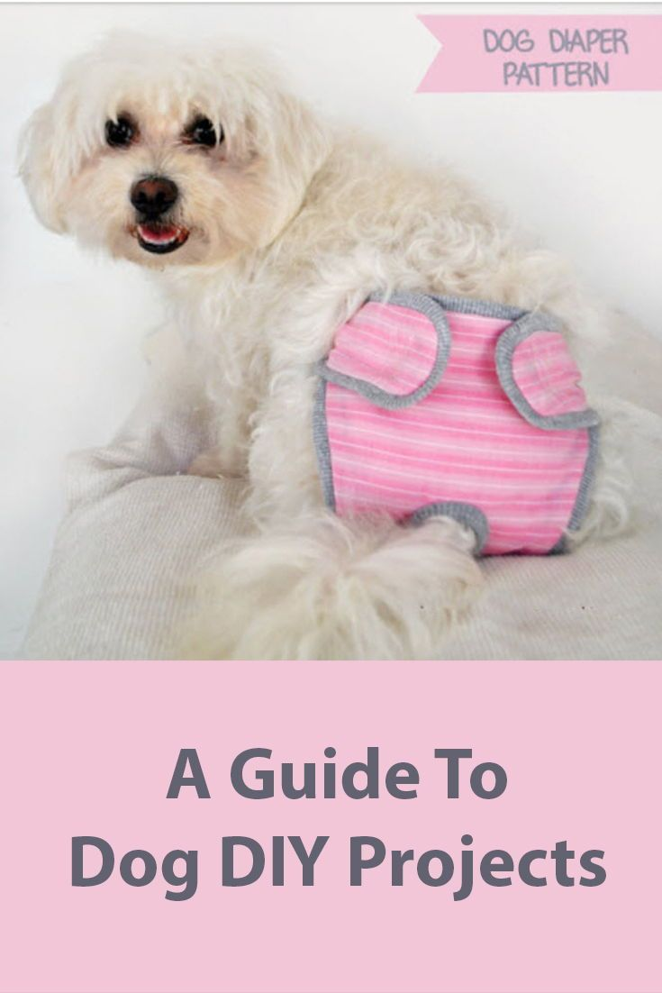 The Ultimate Guide To Dog Diy Projects Part 7 Dog Diapers