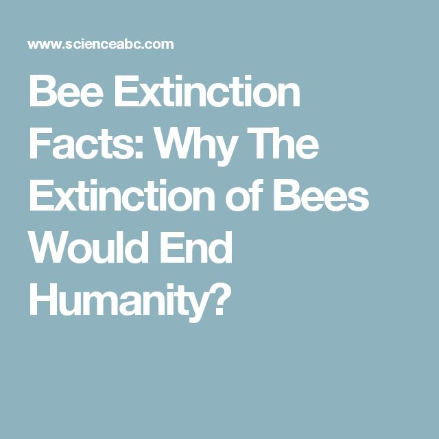 Bee Extinction Facts: Why The Extinction of Bees Would End Humanity?