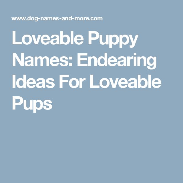 Loveable Puppy Names: Endearing Ideas For Loveable Pups