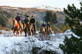 Tours de equitación en Islandia.