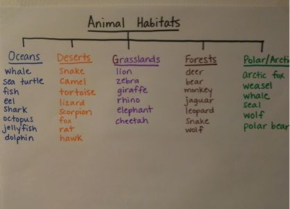 Animal Habitats anchor chart
