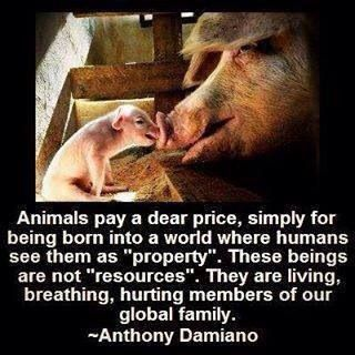 Farm animals deserve better. Animal rights IF YOU KNEW, WHAT THEY GO THROUGH, .WOULD YOU STILL EAT THEM?  DO  YOU EVEN CARE?????