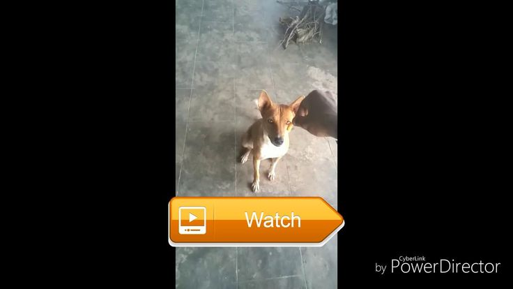 dogs doing funny things  dogs cat dogs cat movie dogs barking dogs barking through fence dogs chasing rabbit dogs fighting dogs mating dogs talking dogs vs  on Pet Lovers