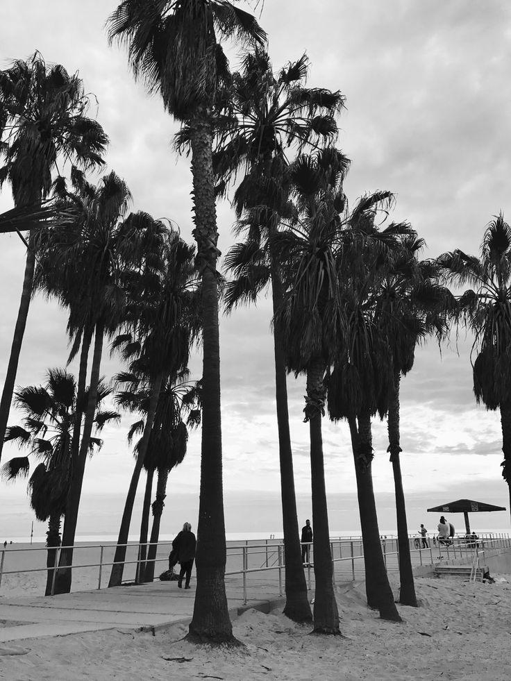 Palm trees and ocean breeze   Instagram: eliniish  Taken by me