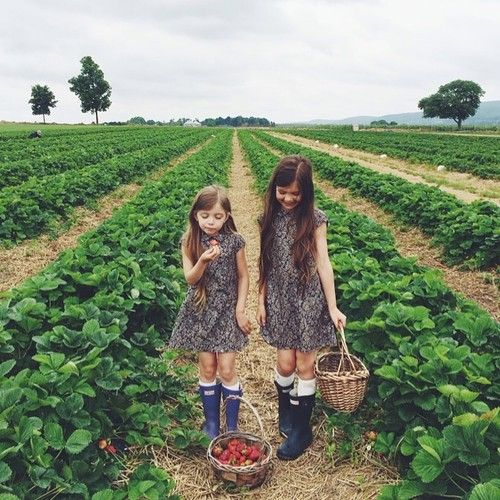 "pureblyss: simply-divine-creation: ""we are enthusiastic strawberry pickers!""» Kirsten Rickert"