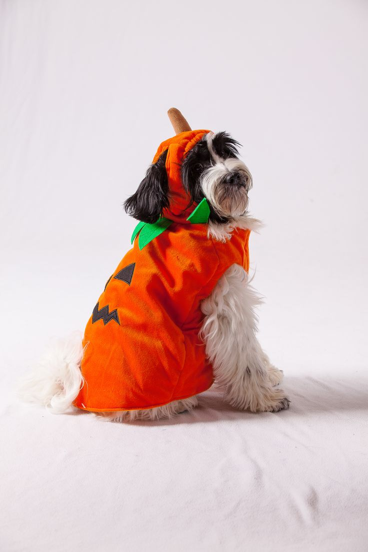 Love this pet costume! Over 15,000 people will score a reward for Pet Supplies Plus valued at $5 - $250. Use yours to deck out your pet for the Halloween Pet Parade in stores Oct. 25th. First come, first served and the highest values go first.