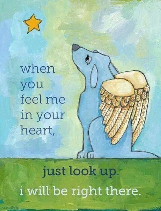 """""""When you feel me in your heart, just look up. I will be right there.""""  """"Ha a szívedben érzel,  csak nézz fel a csillagokra.  Én ott leszek!""""  #pinterest #kutya #idézetek #dog #quotes #kutyabaráthelyek #kutyásidézet"""