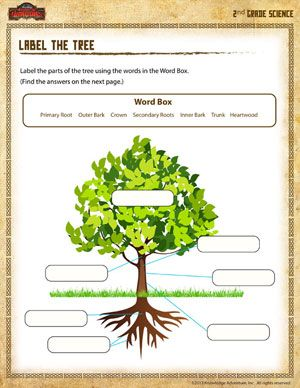 Label the Tree - Printable Second Grade Science Worksheet ...