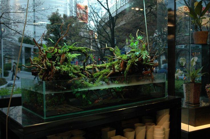 アクアテラリウム専門店 PLANTSTON プランツトン...Now that is a terrarium...