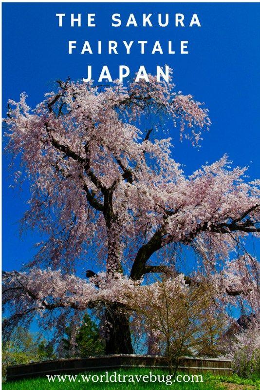 A sakura fairytale - a photo essay showcasing 50 wonderful cherry blossoms photos