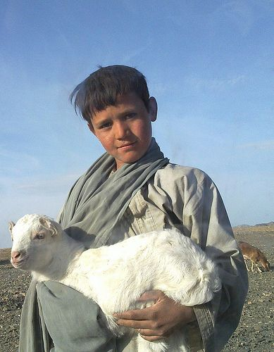 Afghan Shepherd: 1000+ Images About Afghanistan On Pinterest