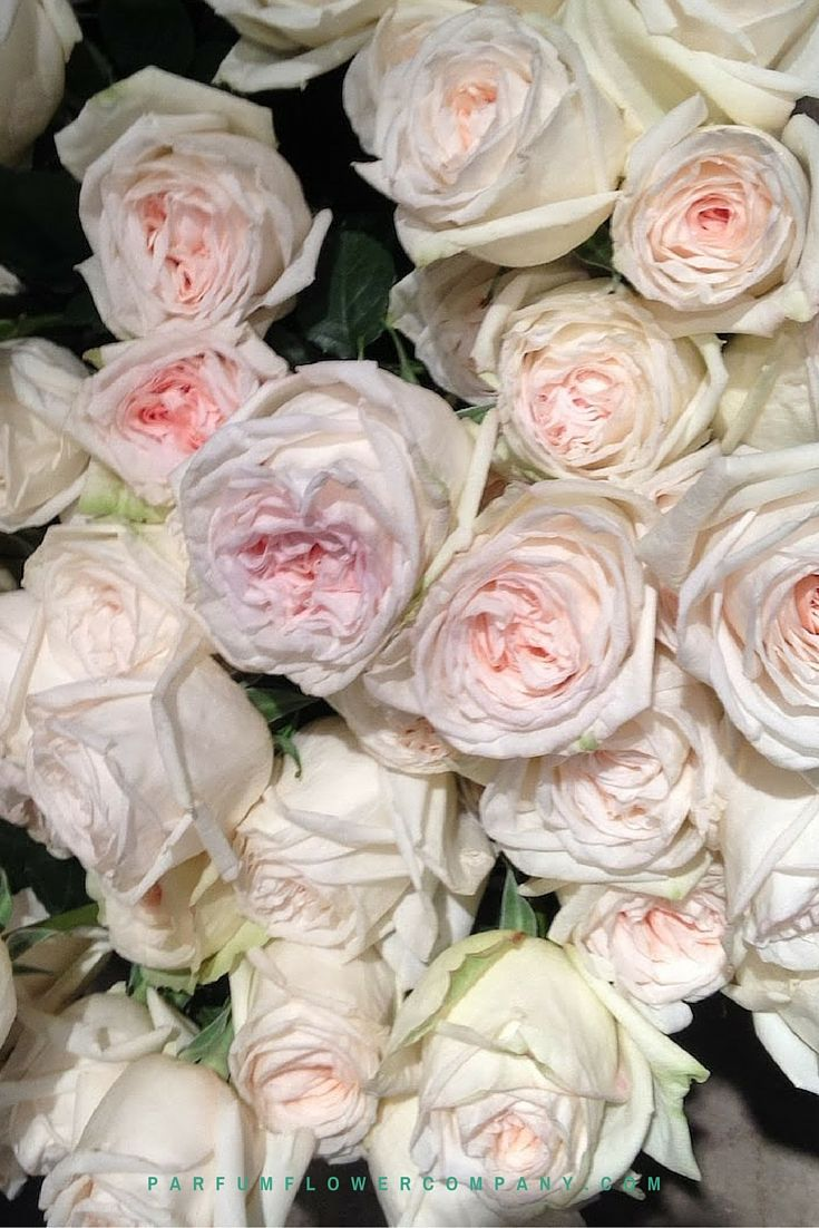 Image result for white o'hara roses
