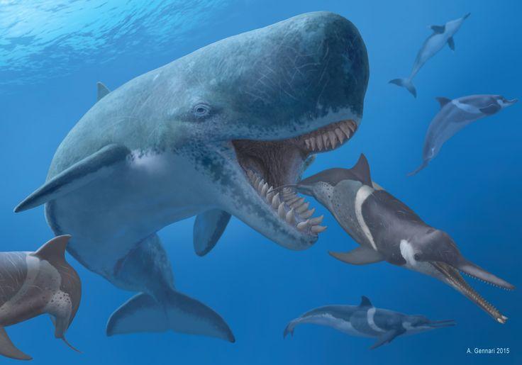 300+ best images about Cetaceamorpha on Pinterest | False ...