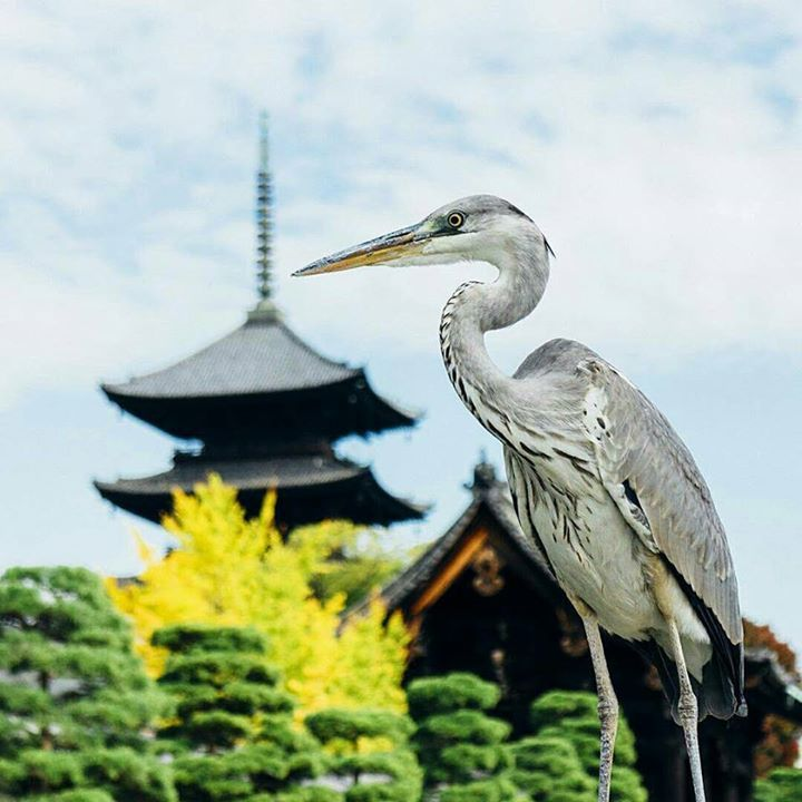 La #photo du jour : au Tô-ji Kyoto kohei713 Plus de photos sur instagram : https://www.instagram.com/journaldujapon/ #Japan