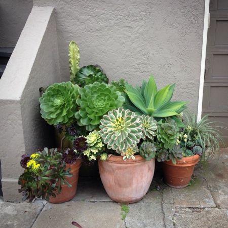 1000 Id Es Sur Le Th Me Succulentes Suspendu Sur Pinterest Plantes Grasses Cache Pots Pour