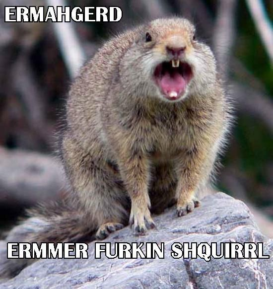 0b0bcbbc8967a74b9514792d12478c97 animal games animal adaptations 27 best ermahgerd! images on pinterest funny images, ha ha and