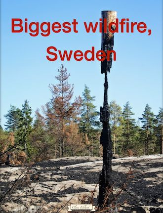 Sweden battles largest forest fire in more than 40 years. The huge blaze raging in the center of the country was declared a national emergency Monday night and currently engulfs an area of 15,000 hectares northwest of Sala, about 120 kilometers northwest of Stockholm. https://itunes.apple.com/se/book/biggest-wildfire-sweden/id934016768?mt=11&uo=4&at=11lHef