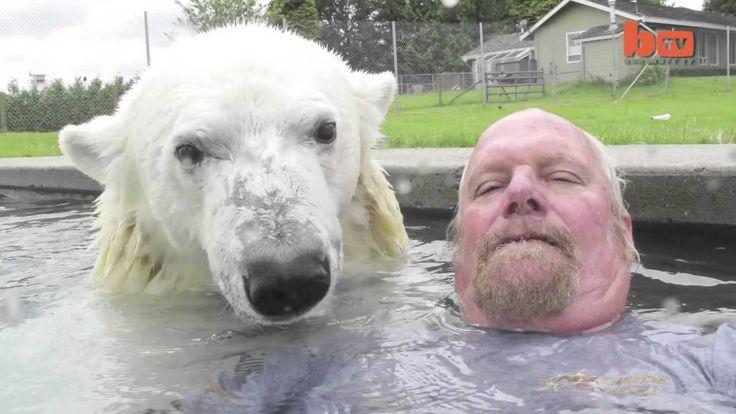 Kutup ayısıyla yüzmek (+oynatma listesi)