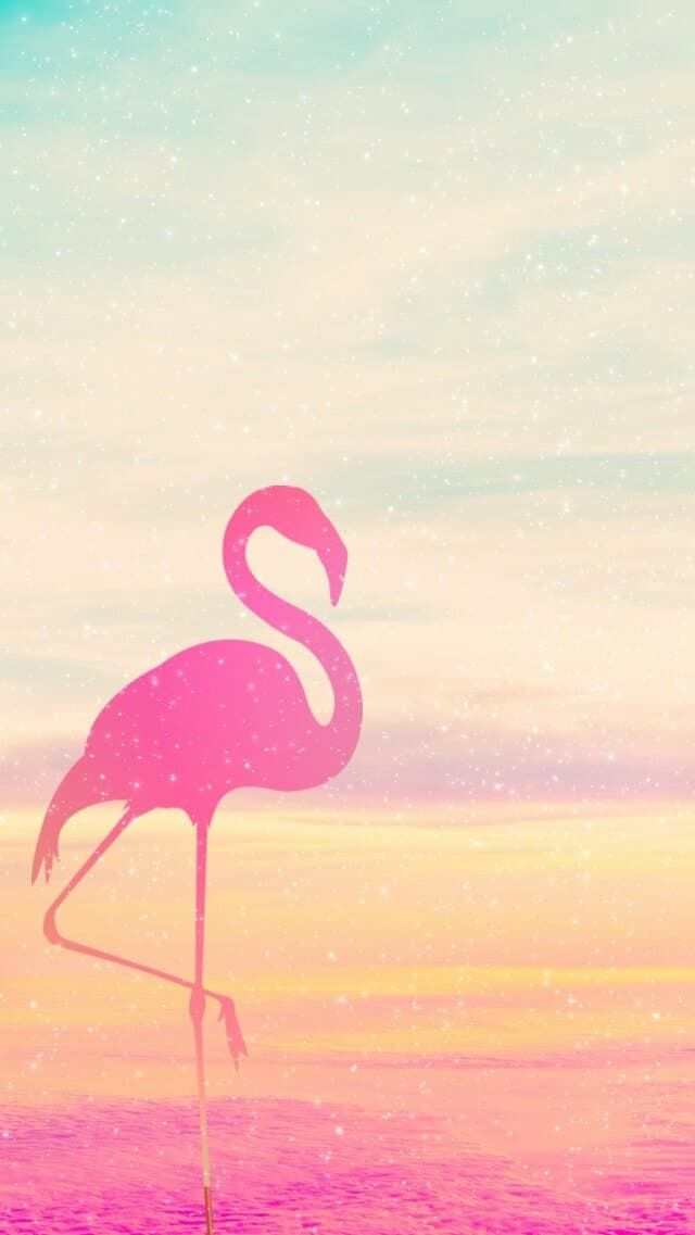 Cute Flamingo Wallpapers Flamingo Pink And Wallpapers Image Wallpaper In 2019