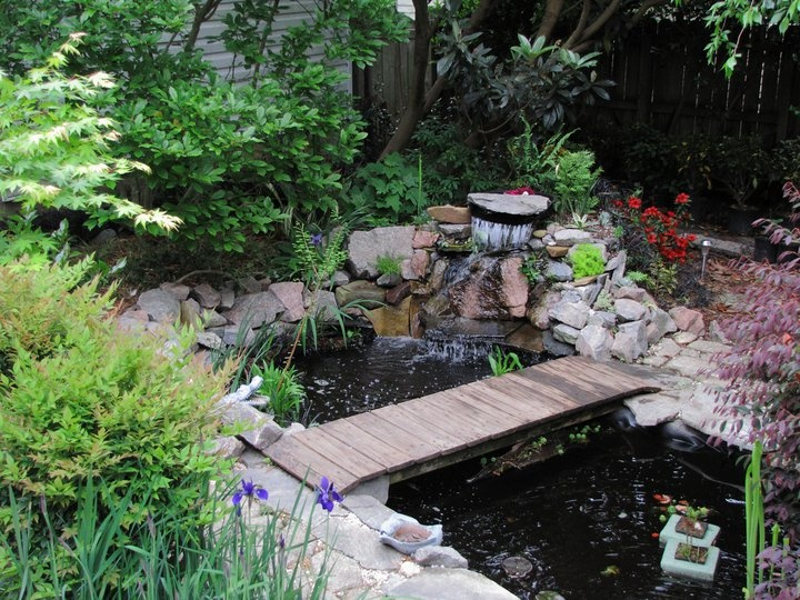 Best 25 small ponds ideas on pinterest small garden for Garden pond ideas pinterest