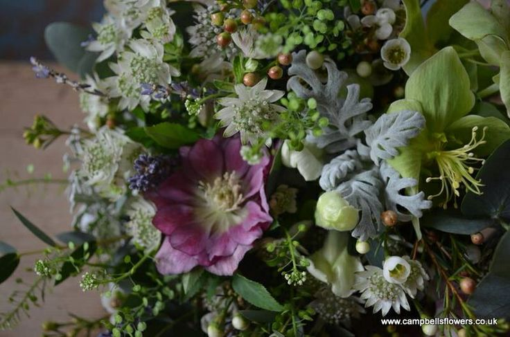 Campbell flowers- beautiful x