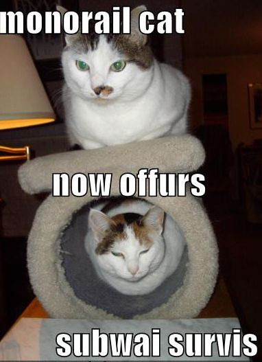 LOLCats monorail cat now offers subway service | lolworthy ...