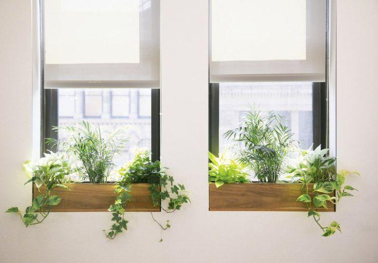 abre-escolher-planta-escritorio